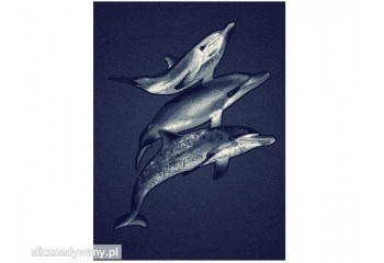 Dywan Delfiny ALFA