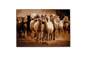 Galop konie to dywan z najnowszej kolekcji dywanów belgijskich.