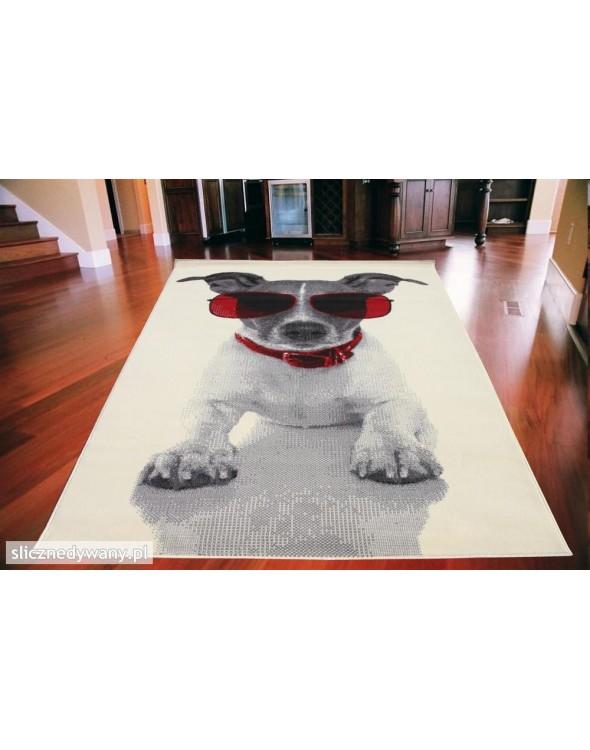 Przepiękny piesek w okularach na białym tle.